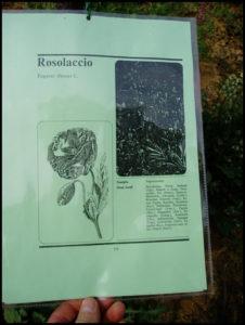 Frittata in passeggiata a Castiglione d'Asti